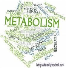 Menigkatkan Metabolisme Tubuh.