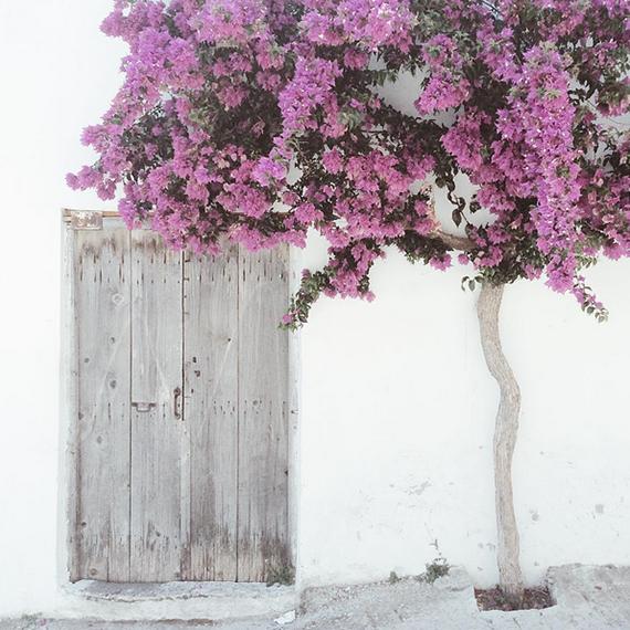 Bougainvillea minimalism #crete by My Paradissi