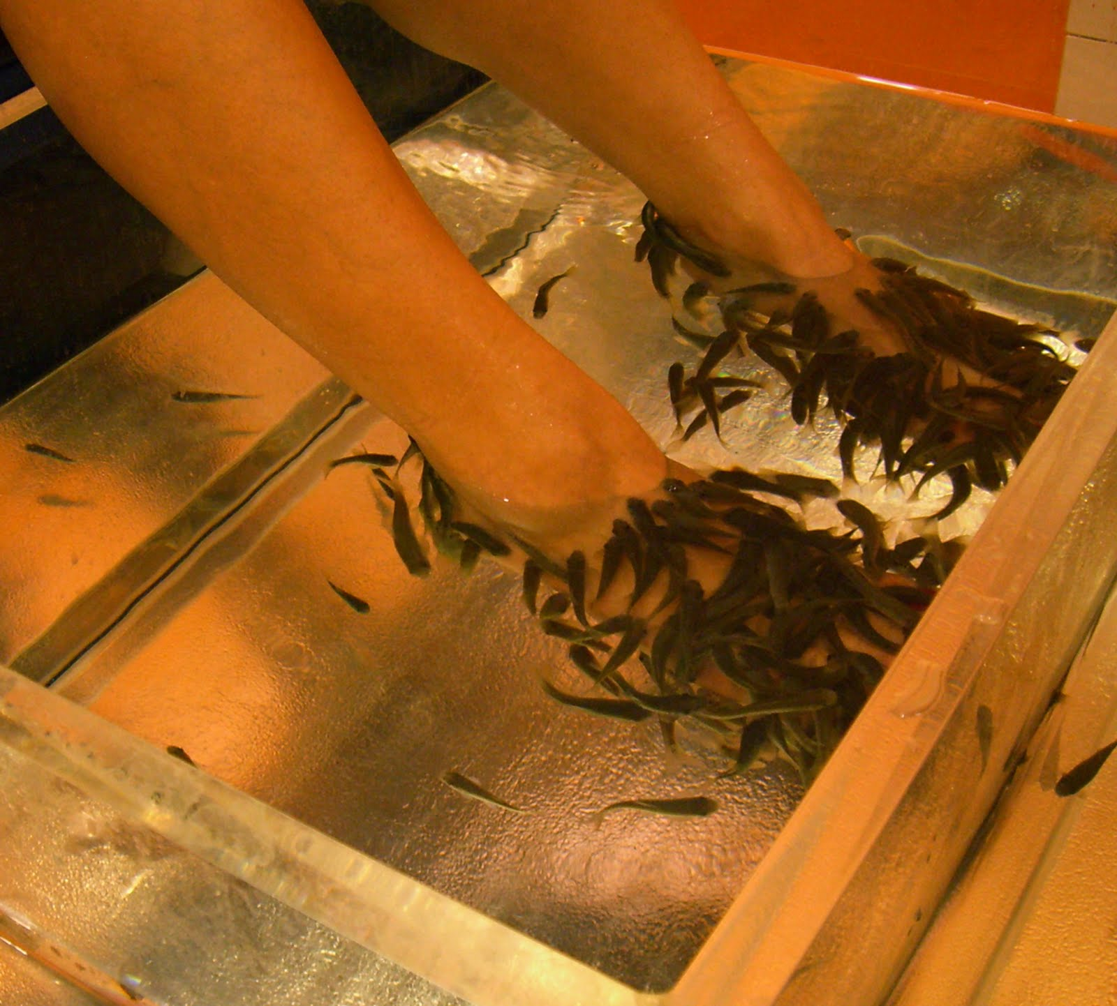 Inside the artisan fish pedicure for Fish eating dead skin spa