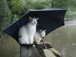 zonahitamdunia.blogspot.com - Kumpulan Foto Unik Saat Banjir4