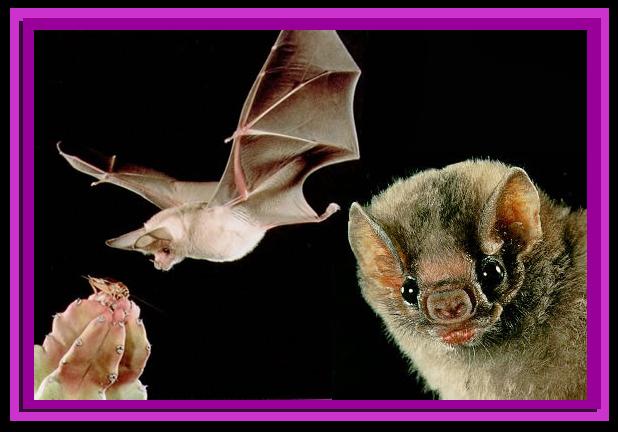 Animales fantasticos: Curiosidades: Otros animales que vuelan sin ...