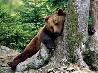 http://1.bp.blogspot.com/-hq0ArVAuZfc/TfN_6zVXatI/AAAAAAAAAuM/gMhLh1XDo_o/s1600/Rest_Stop_Brown_Bear-1600x1200.jpg