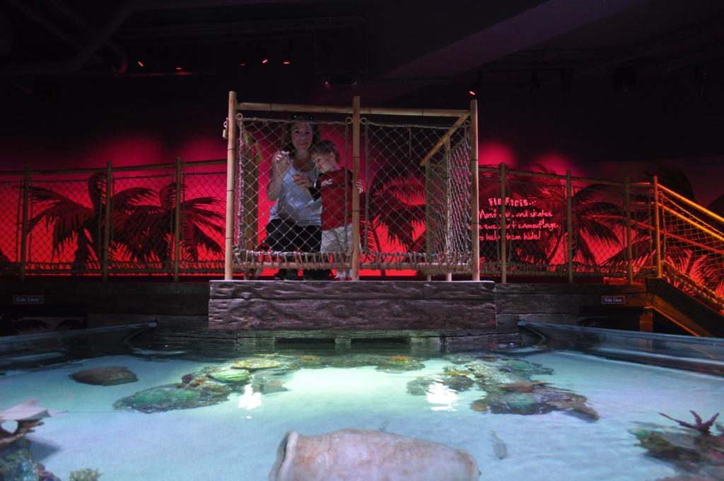 Aquarium Store Kansas City Kansas City Aquarium Crown