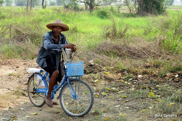 Sukhothai rice farmer
