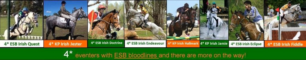 ESB has helped to produce eight 4* horses