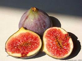 les fruits de tou bichvat les figues