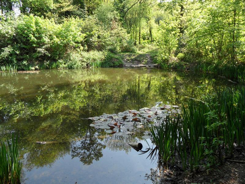 Il giardino delle naiadi un laghetto naturale for Laghetto naturale