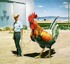 Richard Dawkins and a chicken