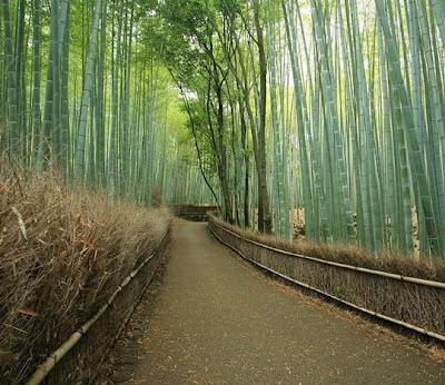 http://asalasah.blogspot.com/2013/06/hutan-ini-bambu-yang-melantunkan-melodi.html