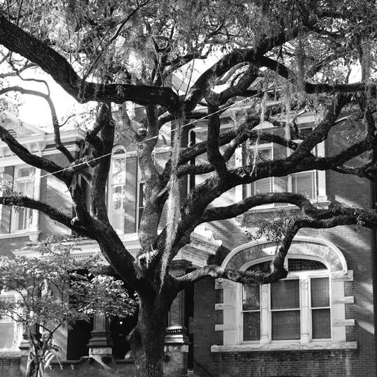 Savannah, Georgia trees