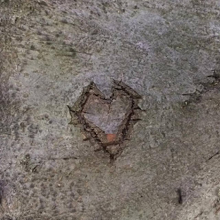 Little Tree Heart