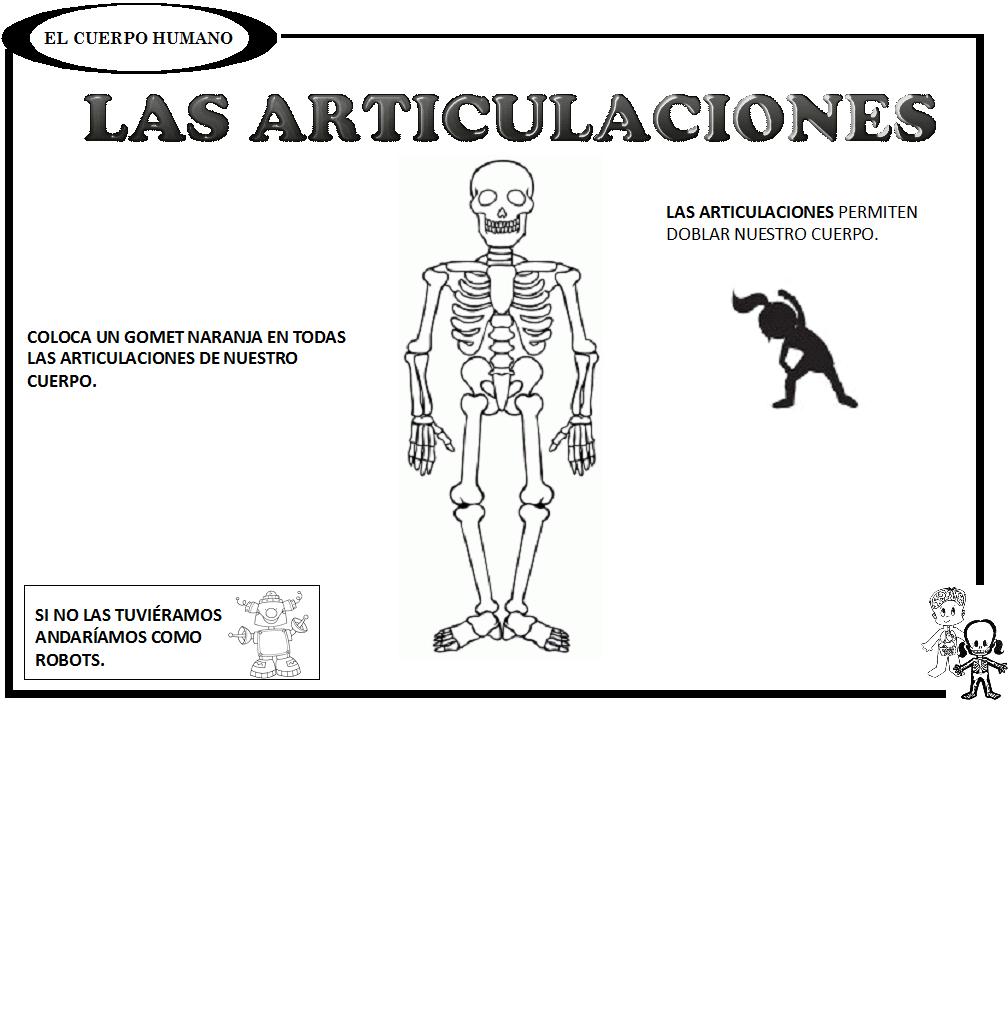 Nombre de todas las articulaciones del cuerpo humano pdf - L ...