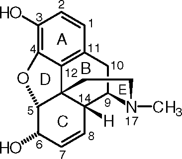 a look at the morphinan structure activity relationships of six popular opiates