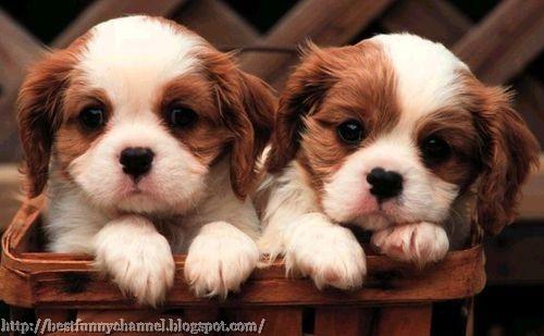 nice puppies Gallery
