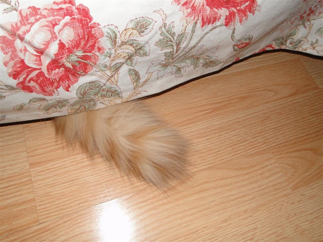 Whose tail is this