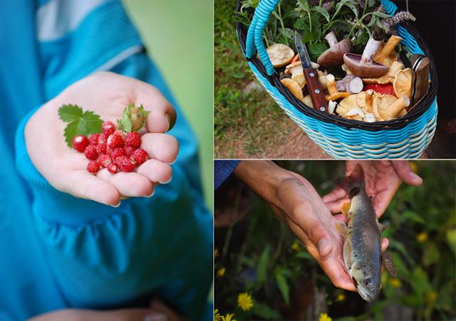 Земляника, грибы и форель на Кавказе