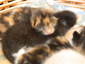New Kittens at Rose Lane Farm