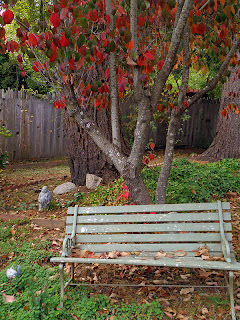 Bench Below Bright Dogwood Tree