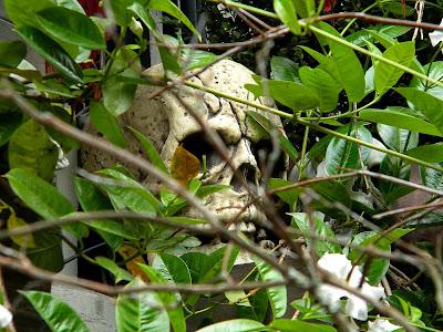 Halloween skull clip art