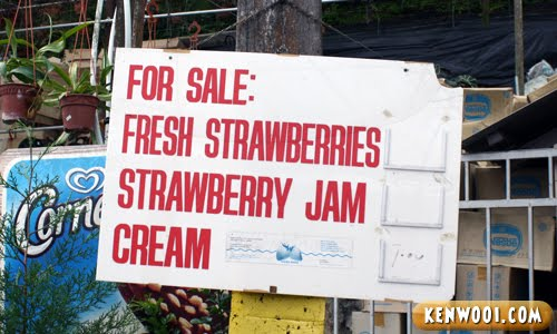 cameron sell strawberry products