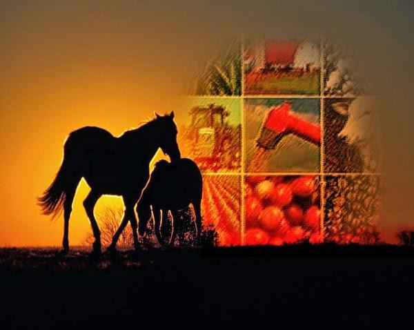 Agricultura & Pecuária
