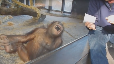 This monkey is laughing at the empty cup?