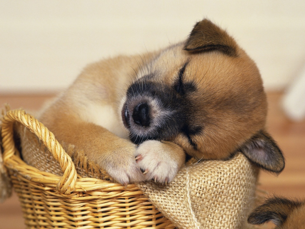 Very Cute Puppy Wallpapers. - latest tech tips
