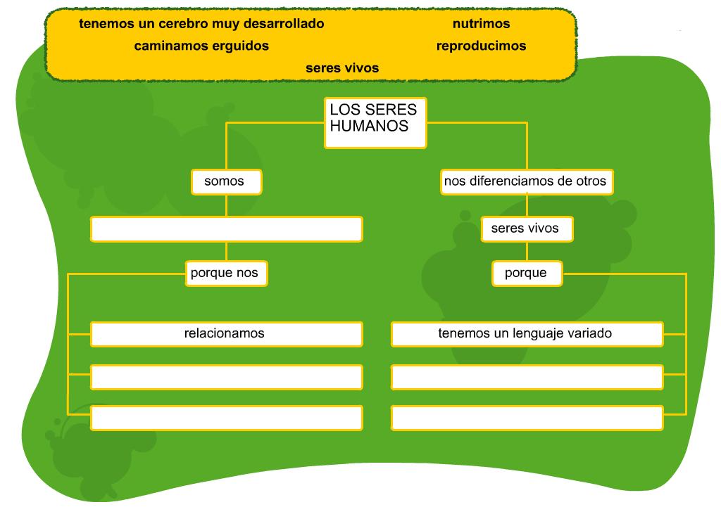http://www.primerodecarlos.com/TERCERO_PRIMARIA/septiembre/unidad1/cono/seres_humanos/visor.swf