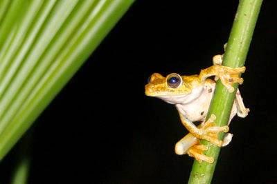 Χαλίλ Γκιμπράν - 4 οι Τέσσερις βάτραχοι. Tα ξέρεις όλα; Khalil Gibran