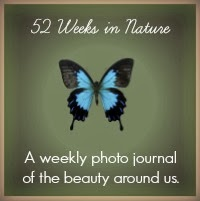 52 Weeks In Nature