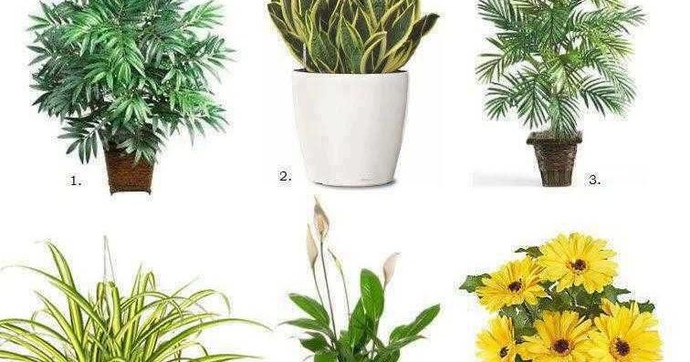 6 plantas purificadoras de aire construccion y for Plantas de interior limpian aire