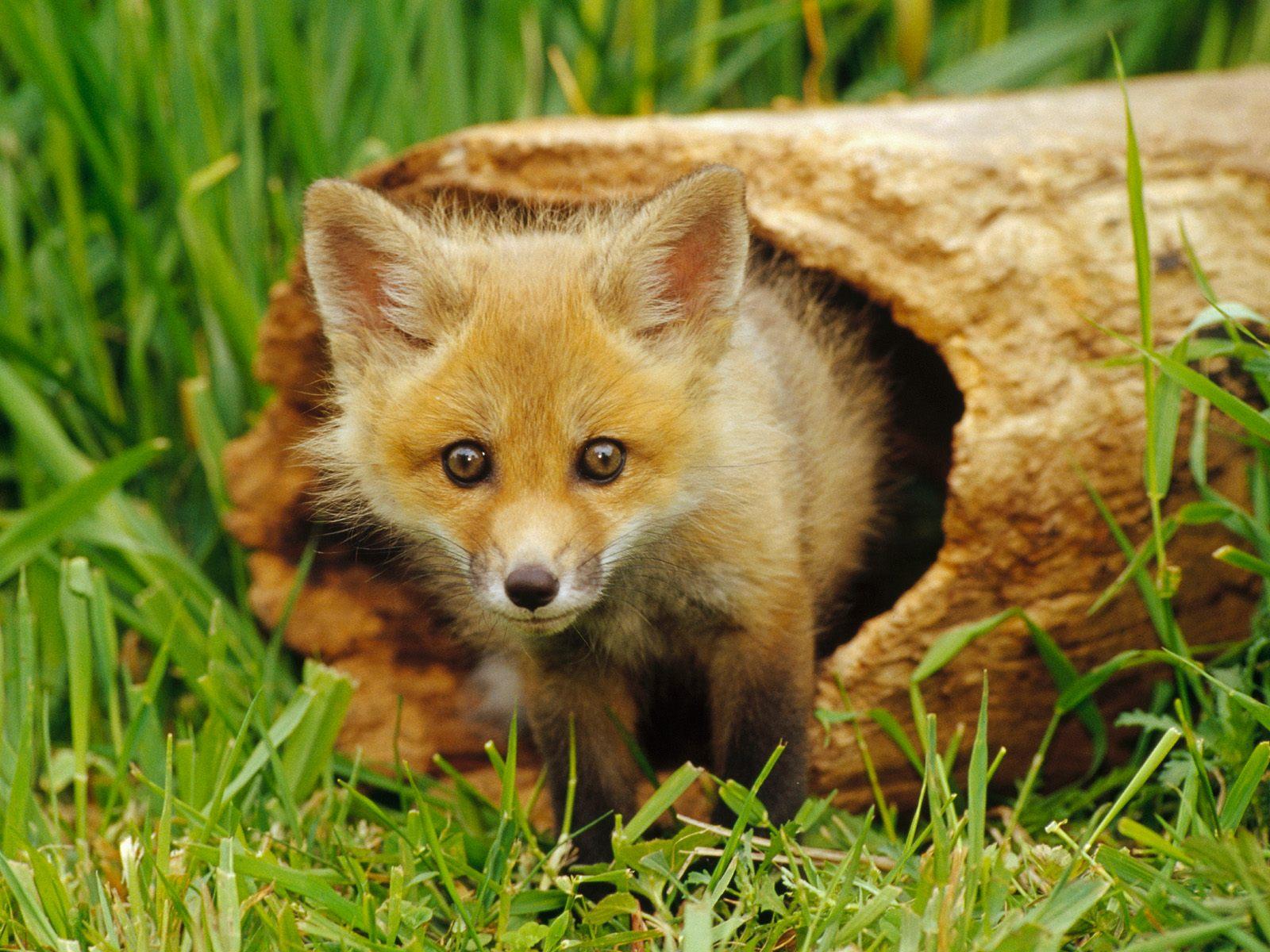 http://1.bp.blogspot.com/-huWUx_EaSm4/TgbnqATU5GI/AAAAAAAAAE8/BoxsR7Usx8U/s1600/animal-wallpaper-01.jpg