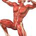 Entenda o que são músculos agonistas, antagonistas, sinergistas e fixadores
