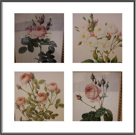 Redoutè Roses