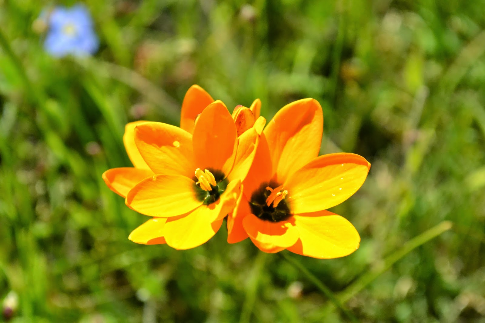 Orange yellow flowers