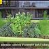 Eco Garden Design Ideas