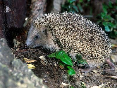 Laghetto di basiglio fauna del laghetto di basiglio for Animali laghetto