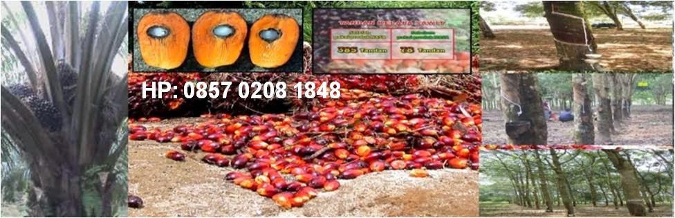 Meningkatkan hasil panen kelapa sawit dan karet