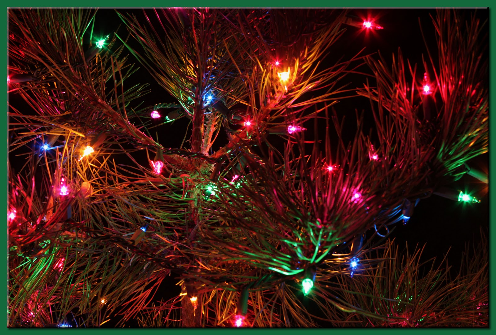 Walk the Dog, Dave: December, Day 4 - A Charlie Brown Christmas Tree
