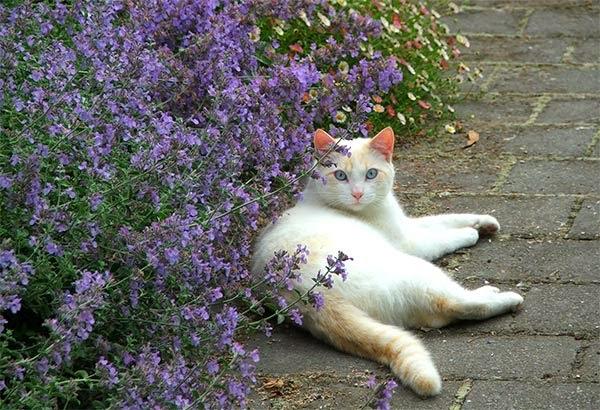 greenzone landscape design sun loving plants that aren 39 t toxic to cats. Black Bedroom Furniture Sets. Home Design Ideas