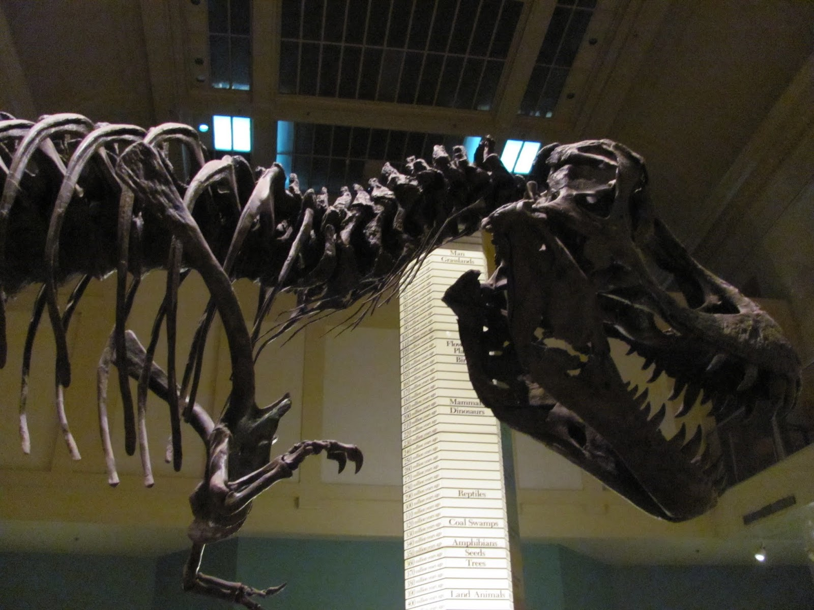 T. Rex fossil at the Smithsonian Natural History Museum in Washington, DC