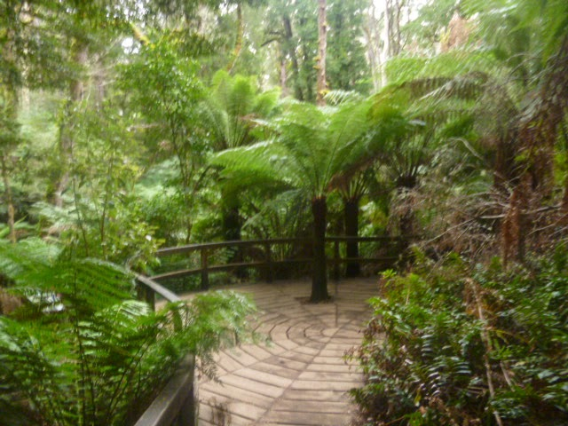 Cape Otway Jungle Walk