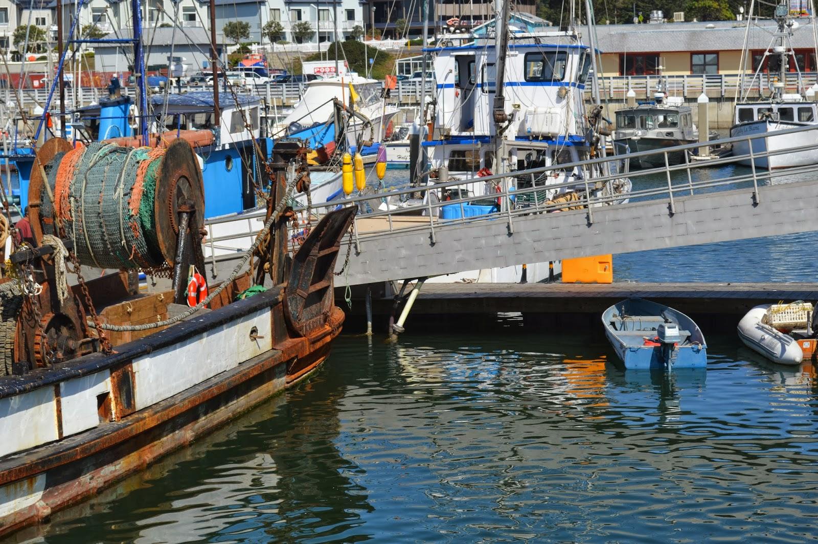 Half moon bay coastal trail autumn walk for Half moon bay pier fishing