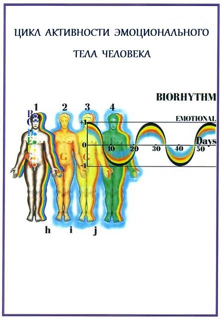 Разновидность сексуальных биоритмов человека