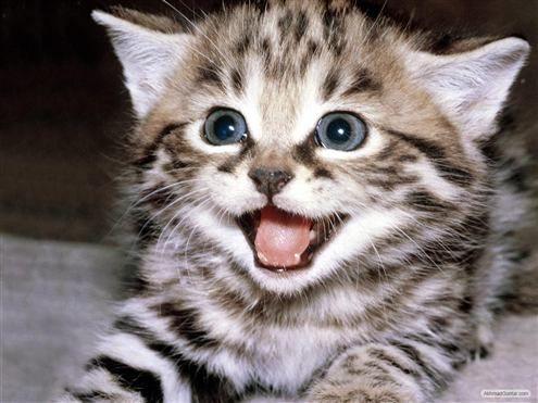 Kucing, Rasulullah Menyayangi Kucing