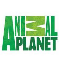 Watch Animal Planet Hindi