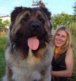 3. Tibetan mastiff