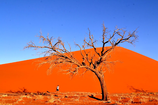 Dune 45, person underneath and a tree in foreground