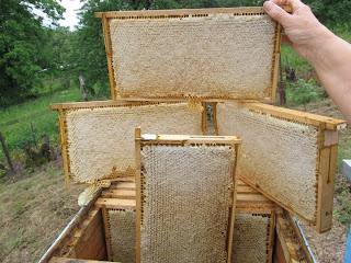 Σεμινάριο Μελισσοκομίας στα Λάβαρα