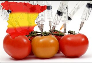 transgénicos en España